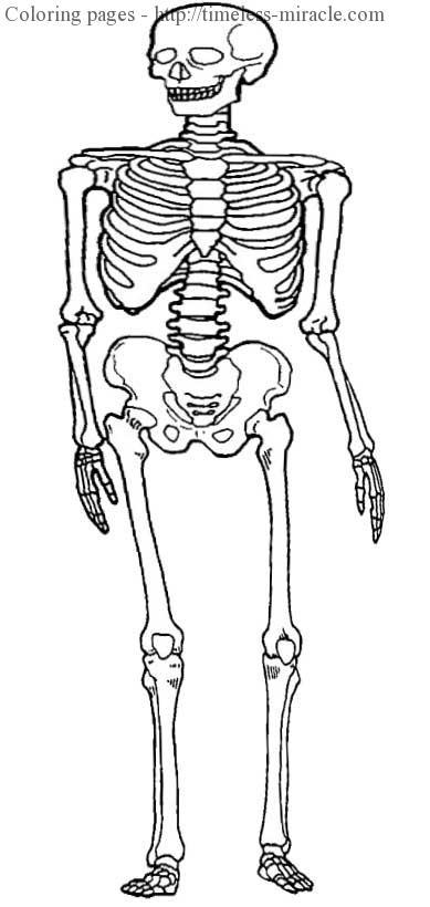 Human bones worksheet