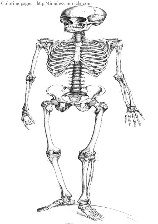 FREE Printable Halloween Skeleton Coloring Page for Kids ... | 847x600