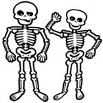 Human skeleton worksheets for kids