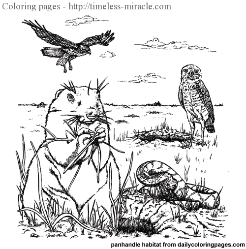 Animal habitat coloring pages - timeless-miracle.com