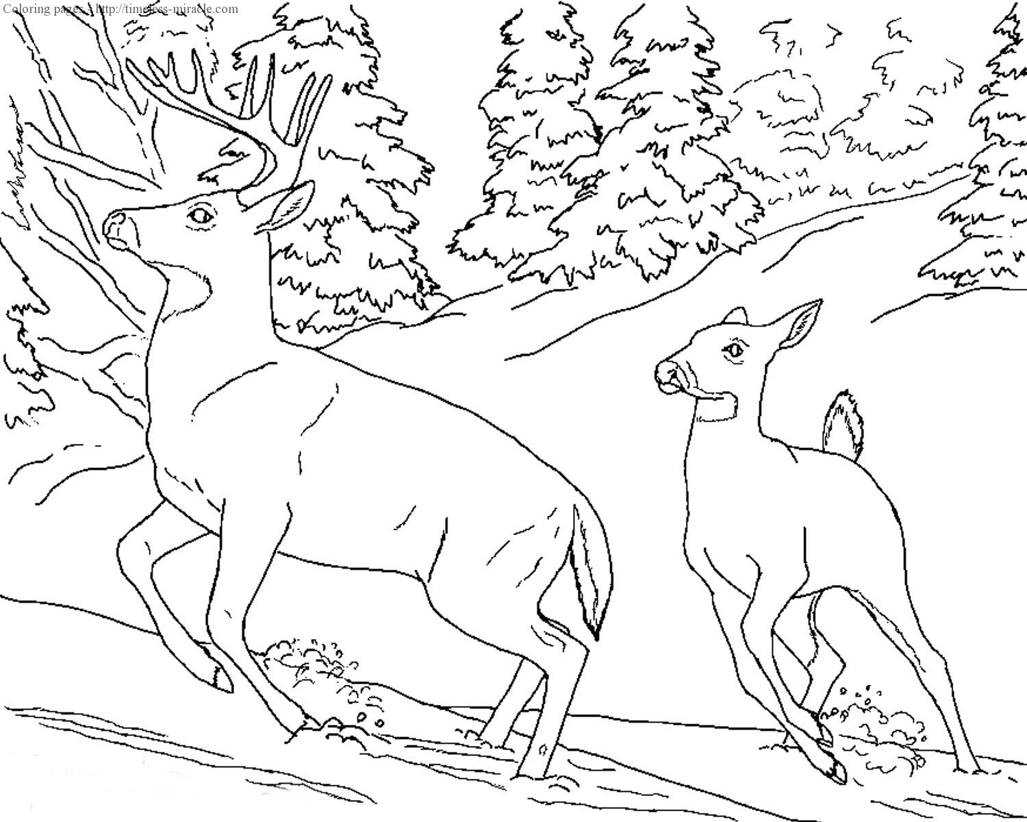 Realistic coloring pages of animals - timeless-miracle.com