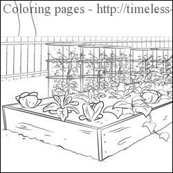 Vegetable Garden Coloring Pages Timeless Miracle Com