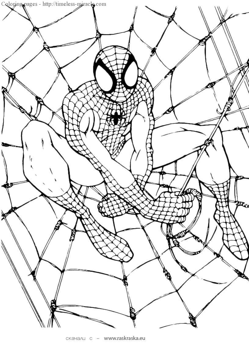 Spider man color pages - timeless-miracle.com