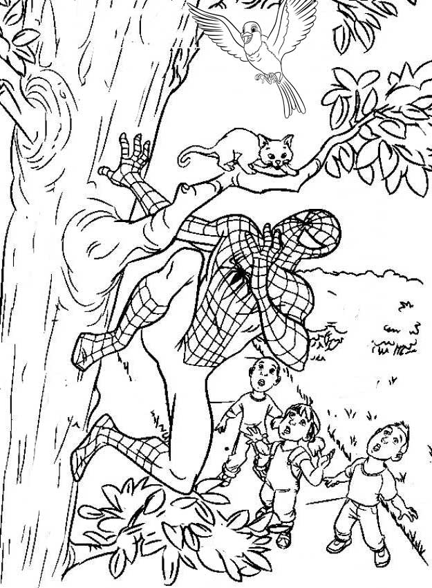 Free spiderman coloring page